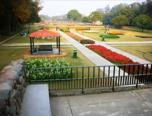 Terraced Garden, Chandigarh | Entry Time | Address | Opening Time | How to reach | Helpline Number