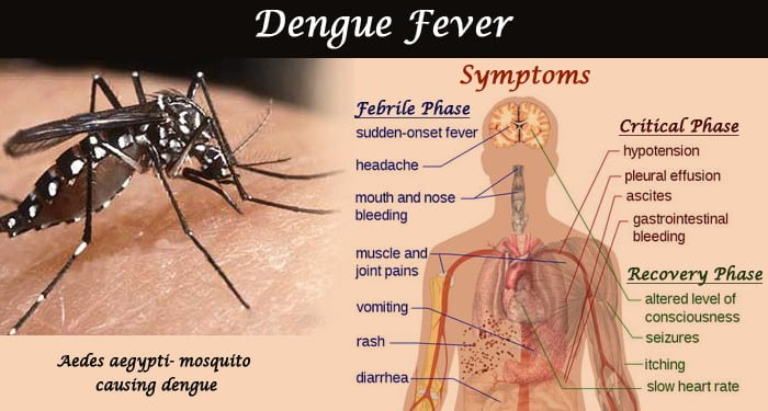 Dengue & Malaria Case Start Coming in Bulk in Delhi, Govt Initiative Again Fail to Prevent it